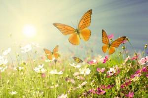 butterflies_12