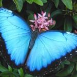 butterflies_13