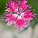 flowers_009