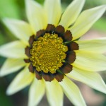 flowers_010