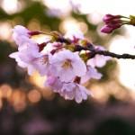 flowers_025