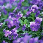 flowers_030