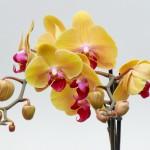 flowers_032