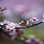flowers_037