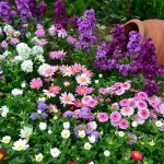 flowers_039