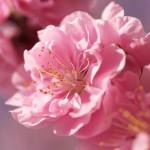 flowers_042