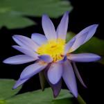 flowers_045