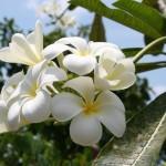 flowers_048