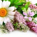 flowers_050