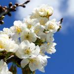 flowers_054