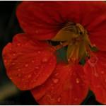 flowers_063