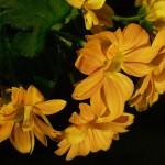 flowers_067