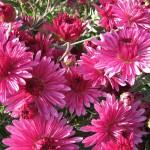 flowers_069
