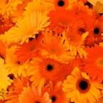 flowers_070