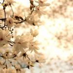 flowers_071