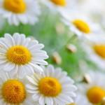 flowers_074