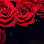 flowers_075