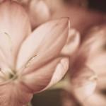 flowers_080