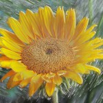 flowers_081