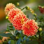 flowers_082