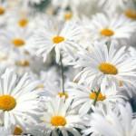 flowers_084