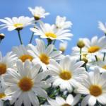 flowers_092