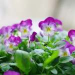 flowers_095