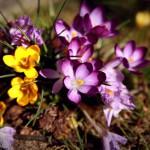 flowers_102