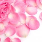 flowers_104
