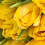 flowers_105