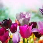 flowers_106