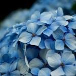 flowers_110