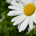 flowers_112
