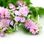 flowers_113