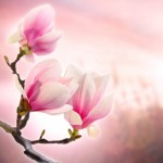 flowers_119