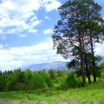 landscape_024