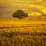 landscape_106
