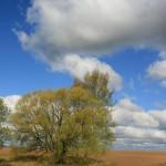 landscape_110