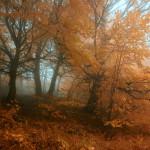 landscape_119
